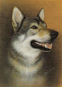 Hundeportrait, Malerei, Portraitzeichnung, Tierportrait