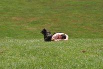 Hund, Menschen, Mann, Rasen