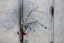 Zweig, Pflanzen, Metall, Wand