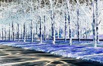 Blendung, Schwarz, Sonnenlicht, Baum