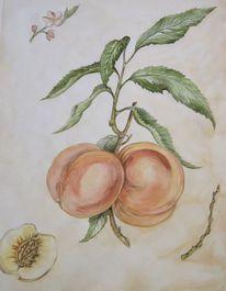 Pfirsich, Aquarell, Malerei, Zeichnung