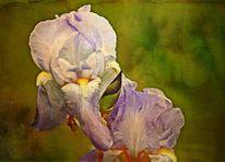 Federzeichnung, Fotografie, Blüte, Blumen