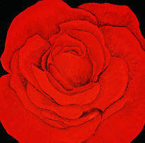 Natur, Blumen, Rot, Blut