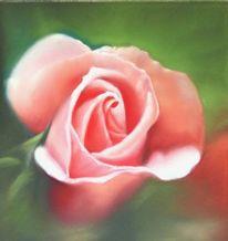 Garten, Röschen, Rosa, Blumen