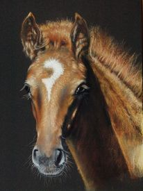Pastellmalerei, Pferde, Kreide, Tiere
