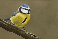 Vogel, Blaumeise, Meise, Malerei
