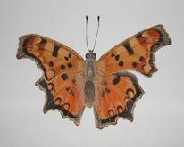 Schmetterling, Natur, Aquarell,