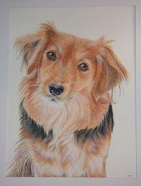 Hund, Tierportrait, Aquarellmalerei, Aquarell