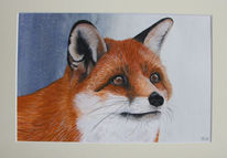 Tiere, Aquarellmalerei, Fuchs, Aquarell
