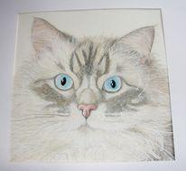 Tiere, Tieraquarell, Tierportrait, Katze