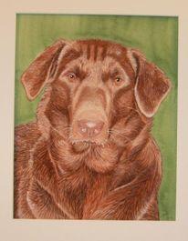 Labrador, Tierportrait, Hund, Aquarellmalerei