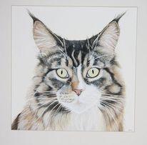 Main coon, Aquarellmalerei, Tierportrait, Katze