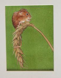 Aquarellmalerei, Maus, Tiere, Aquarell
