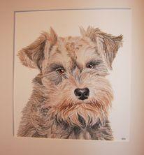Tierportrait, Aquarellmalerei, Hund, Aquarell