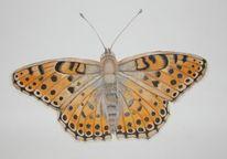 Kaisermantel, Schmetterling, Natur, Aquarell