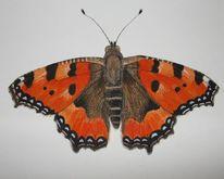 Natur, Kleiner fuchs, Schmetterling, Aquarell