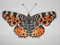 Landkärtchen, Natur, Schmetterling, Aquarell