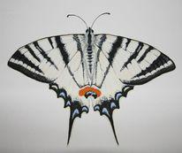 Natur, Schmetterling, Segelfalter, Aquarell