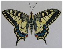 Schwalbenschwanz, Schmetterling, Aquarell