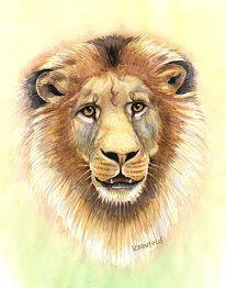 Löwe, Aquarellmalerei, Afrika, Hitze