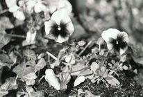 Analog, Zerfall, Blumen, Schwarz weiß