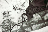 Schnee, Analog, Winter, Schwarz weiß