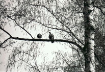 Taube, Natur, Vogel, Wald