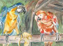 Brasilien, Aquarellmalerei, Papagei, Aquarell