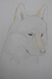 Zeichnungen, Hund, Studie