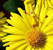 Miniaturfiguren, Frühling, Frühlingsgefühle, Fotografie