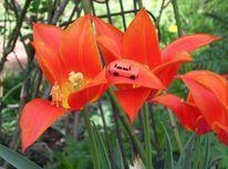 Frühlingsgefühle, Miniaturfiguren, Fotografie