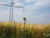 Fotografie, Landschaften, Pusteblume