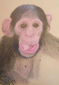 Affe, Tiere, Afrika, Pastellmalerei