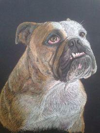 Hund, Pastellmalerei, Tierportrait, Bulldogge