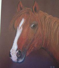 Pastellmalerei, Pferde, Blick, Braun