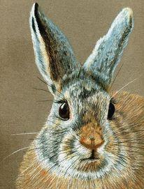 Hase, Tiere, Pastellmalerei, Natur