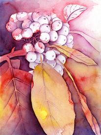 Warm, Herbst, Blumen, Beere