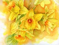 Orange, Osterglocken, Gelb, Frühling