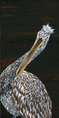Tiere, Pelikan, Feder, Vogel