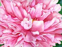 Blumen, Bunt, Rose, Aquarellmalerei