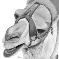 Bleistiftzeichnung, Zeichnung, Kamel, Zeichnungen