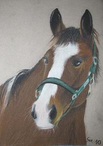 Pferde, Pferdeportrait, Pastellmalerei, Pferdezeichnung
