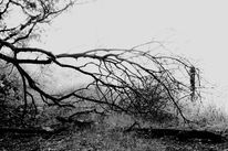 Lichtschatten, Landschaft, Baum, Schwarz