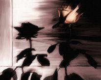Blumme, Schatten, Rose, Blumen
