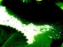 Sommer, Wasser, Tropfen, Blätter