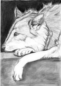 Wolf, Kohlezeichnung, Schraffur, Zeichnungen