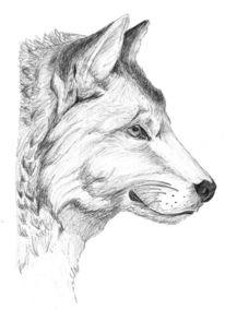 Wolf, Schraffur, Zeichnungen, Tiere