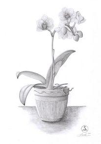 Pflanzen, Orchidee, Zeichnungen, Stillleben