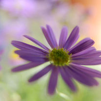 Blüte, Sommer, Blumen, Fotografie