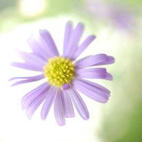 Lila, Schweben, Blüte, Sommer